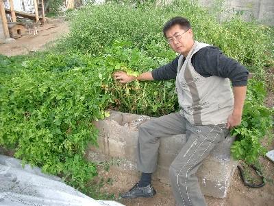 как выращивать огурцы в мешках фото