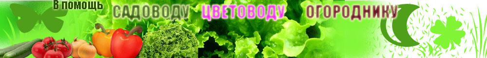 http://em.shopargo.com/img/hender.jpg